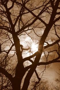 Branches in the Dark by Valentino Visentini