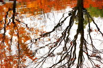 Fall Reflections by Valentino Visentini