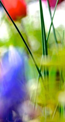 """lacy """"x"""" by © Ivonne Wentzler"""