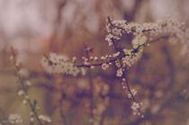 spring #2 von mirowsky
