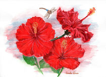 Hibiscus-drawing