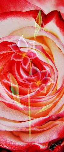 Rosen und Glochenlilie Abstrakt 4 by Walter Zettl
