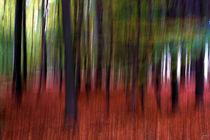 Herbst im Wald von ndsh