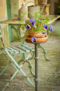 Pot of Pansies von Judith Monteferrante