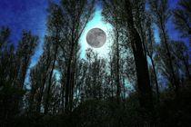 Moonlight - Mondlicht von leddermann