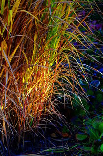 This autumn color of grass. by Roman Popov