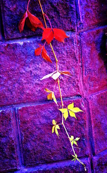 A tree branch with autumn leaves on the background of masonry. von Roman Popov