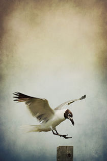 A Seagull's Landing by Trish Mistric