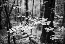 Lenta Conversazione 16 by Ian Gazzotti
