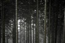Winterwald by J.A. Fischer