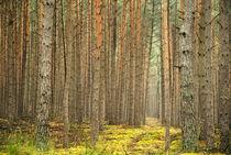 Baum an Baum 3 von J.A. Fischer