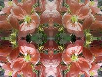 Cherry tree blossom pattern by Robert Gipson