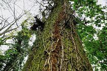 Ein ganz normaler Baum von leddermann