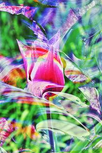 Natur Abstrakt  15 by Walter Zettl