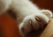 Katzenpfötchen by Christiane Schiff