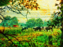 on the pasture by urs-foto-art