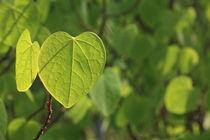 Green leaves von Jutta Ehrlich