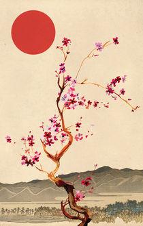 Sakura von Nedim Seferovic