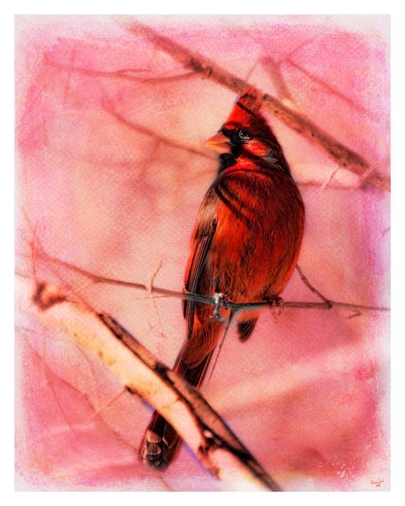 Cardinalthorntree