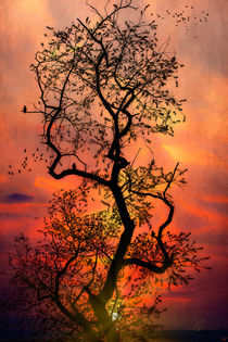 Sunset Tree Fantasy by Chris Lord