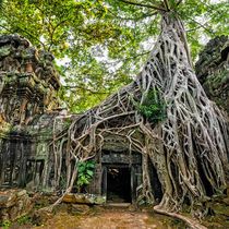 Ta Prohm Temple At Angkor Wat Complex von perfectlazybones