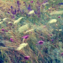 Wild flowers by perfectlazybones