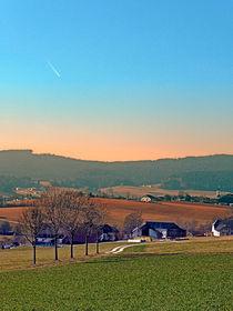 Allee mit Bäumen, Panorama und Sonnenuntergang | Landschaftsfotografie by Patrick Jobst
