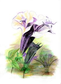 Double Lavender Angel Trumpet von Linda Ginn