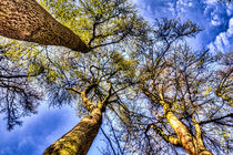 Into The Trees by David Pyatt