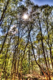Summer Forest Trees by David Pyatt