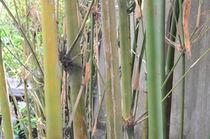 Bamboo earth von Khac Hieu Hieu
