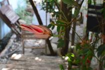 Become Flower by Khac Hieu Hieu