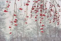 North-West Russia von Vadim Smirnov