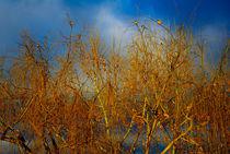 Golden Sunrise von crismanart