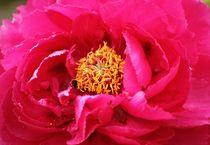 Blüte mit Hummel von Sandra Fried