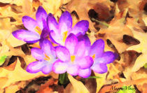 Purple Crocus Floral by Maggie Vlazny