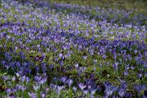 Blaue Freude by lisa-glueck