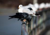 der frühe Vogel fängt den Wurm by Andreas Rohrer