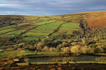 Dartmoor from Bonehill von Pete Hemington