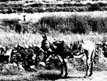 Die Frau und der Esel by reisemonster