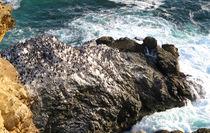 Versammlung der Pinguine von reisemonster
