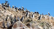 Versammlung der Vögel by reisemonster