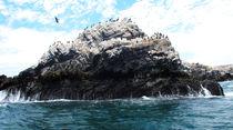 Galapagos für Arme von reisemonster