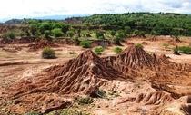 wüste mit Landschaftsgrün von reisemonster
