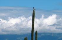 der Vogel auf dem Kaktus by reisemonster