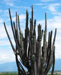 Kaktusvogel von reisemonster