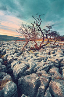 Limestone Pavement von David Pinzer