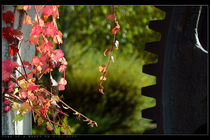 Cogs of a wheel by bagojowitsch