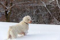 I Love The Snow by Davandra Cribbie