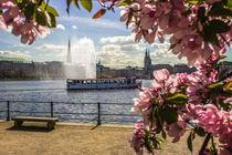 Alsterdamper auf der Binnenalster Hamburg von Dennis Stracke